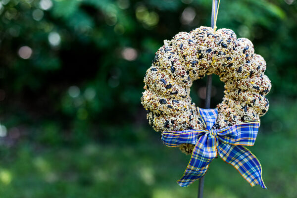 Bird seed wreath with blue bow